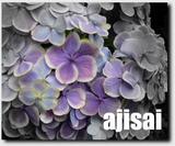 Ajisai